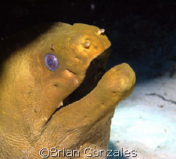 Morey Eel, Cozumel Mexico by Brian Gonzales 